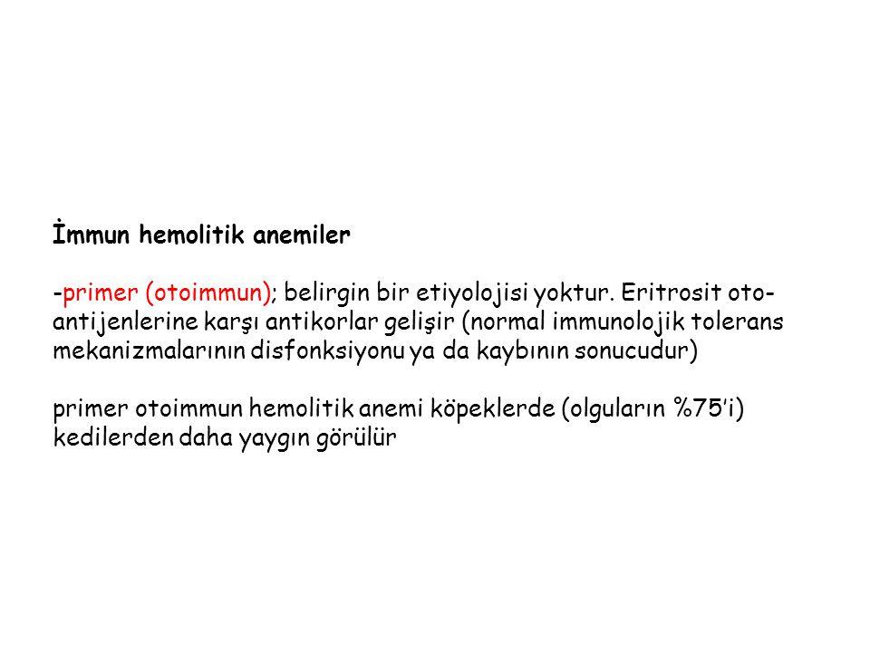 İmmun hemolitik anemiler -primer (otoimmun); belirgin bir etiyolojisi yoktur.