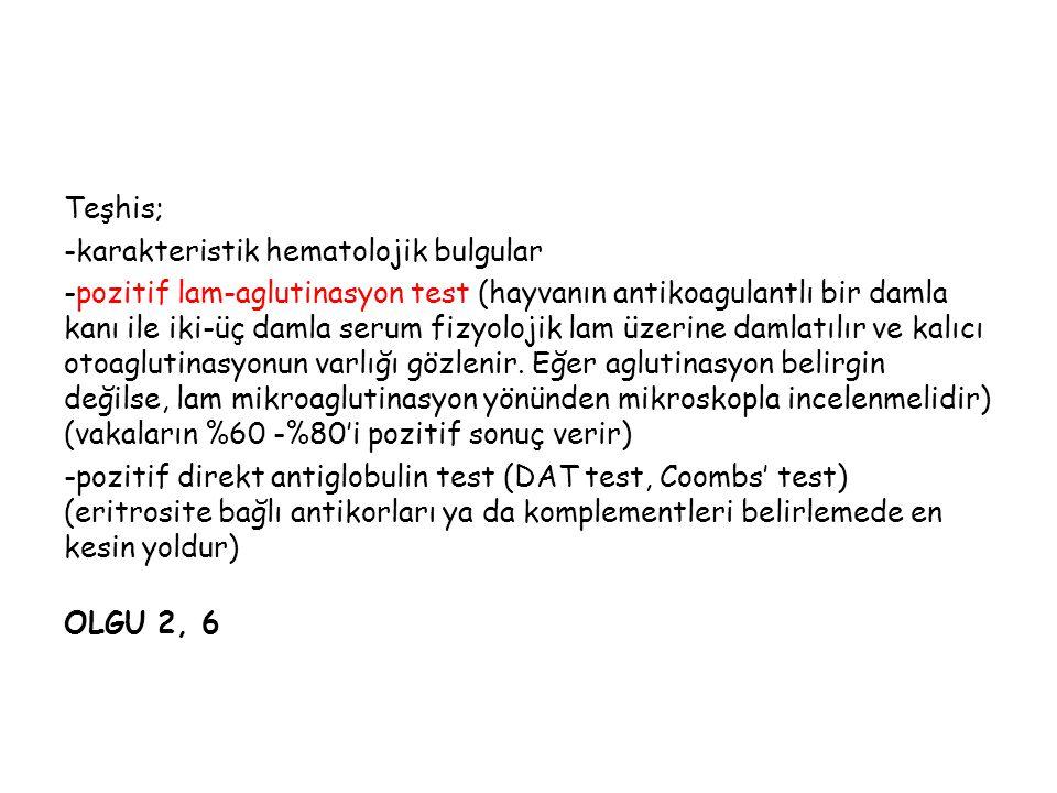 Teşhis; -karakteristik hematolojik bulgular.