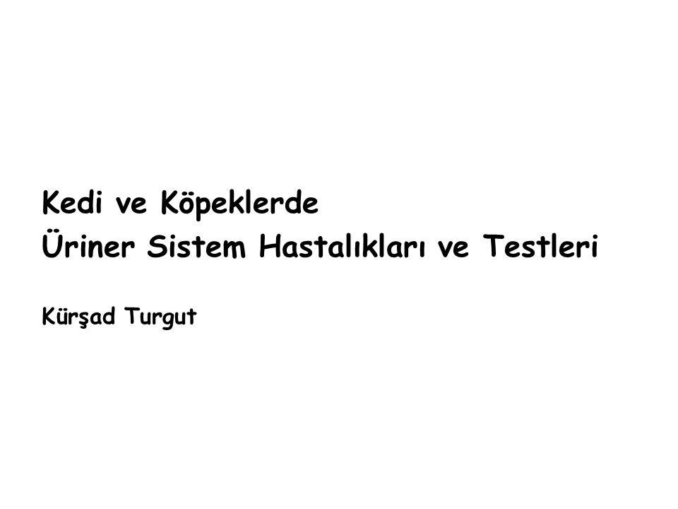 Üriner Sistem Hastalıkları ve Testleri