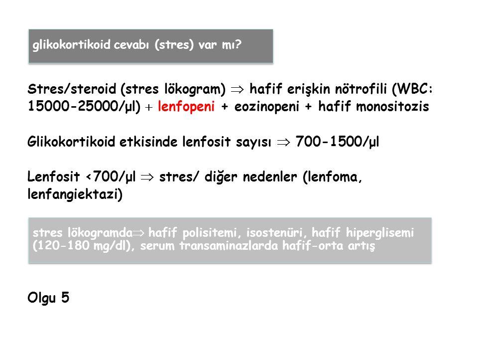 Stres/steroid (stres lökogram)  hafif erişkin nötrofili (WBC: