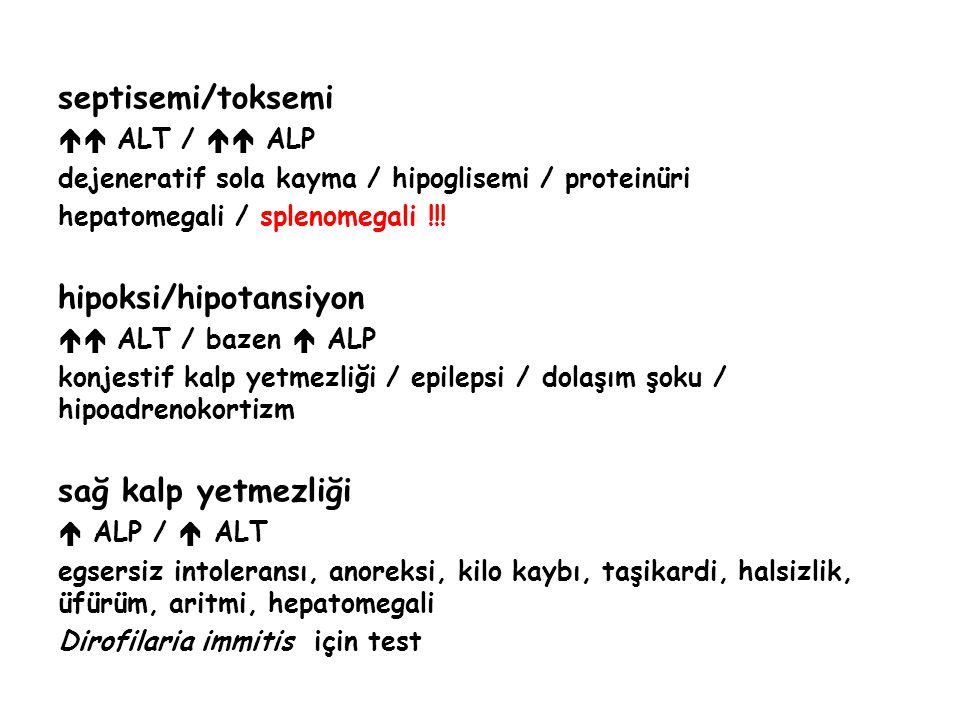 hipoksi/hipotansiyon