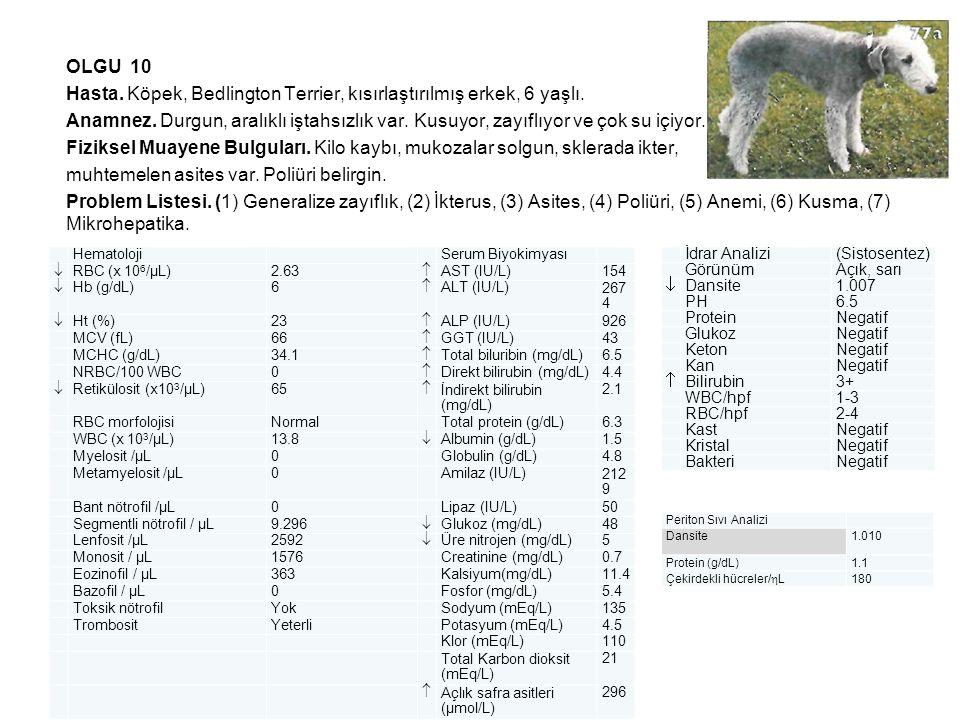OLGU 10 Hasta. Köpek, Bedlington Terrier, kısırlaştırılmış erkek, 6 yaşlı. Anamnez. Durgun, aralıklı iştahsızlık var. Kusuyor, zayıflıyor ve çok su içiyor. Fiziksel Muayene Bulguları. Kilo kaybı, mukozalar solgun, sklerada ikter, muhtemelen asites var. Poliüri belirgin. Problem Listesi. (1) Generalize zayıflık, (2) İkterus, (3) Asites, (4) Poliüri, (5) Anemi, (6) Kusma, (7) Mikrohepatika.