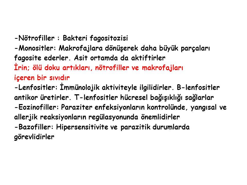 -Nötrofiller : Bakteri fagositozisi