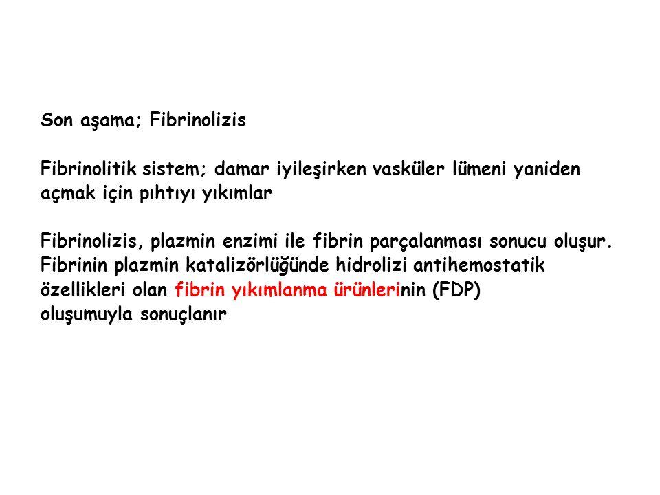 Son aşama; Fibrinolizis