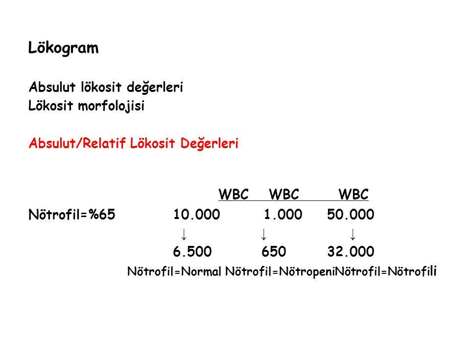 WBC WBC WBC Lökogram Absulut lökosit değerleri Lökosit morfolojisi