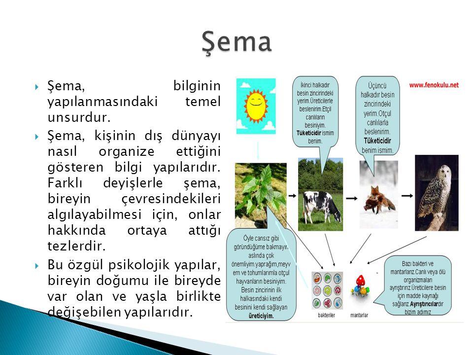 Şema Şema, bilginin yapılanmasındaki temel unsurdur.