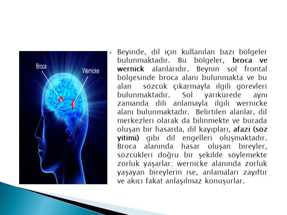 Beyinde, dil için kullanılan bazı bölgeler bulunmaktadır