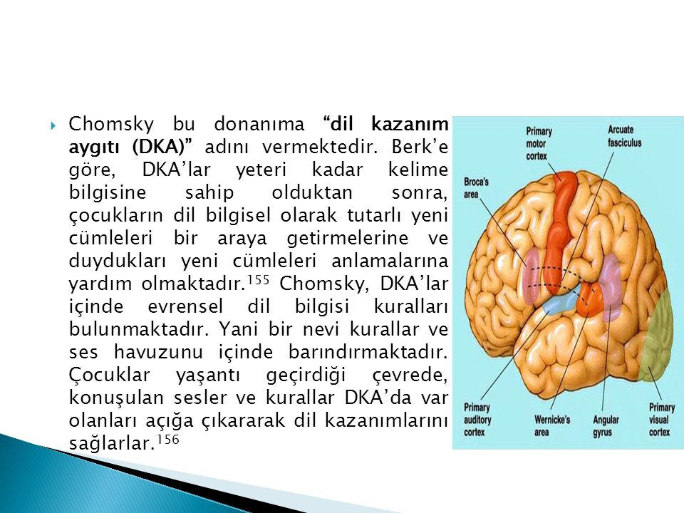 Chomsky bu donanıma dil kazanım aygıtı (DKA) adını vermektedir