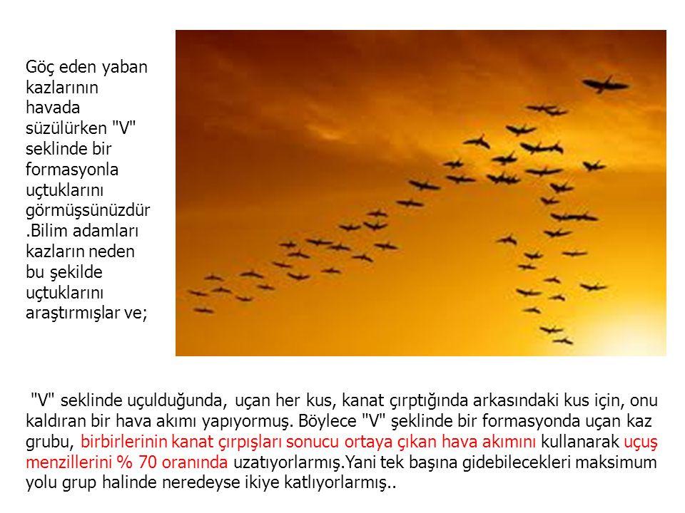 Göç eden yaban kazlarının havada süzülürken V seklinde bir formasyonla uçtuklarını görmüşsünüzdür.Bilim adamları kazların neden bu şekilde uçtuklarını araştırmışlar ve;