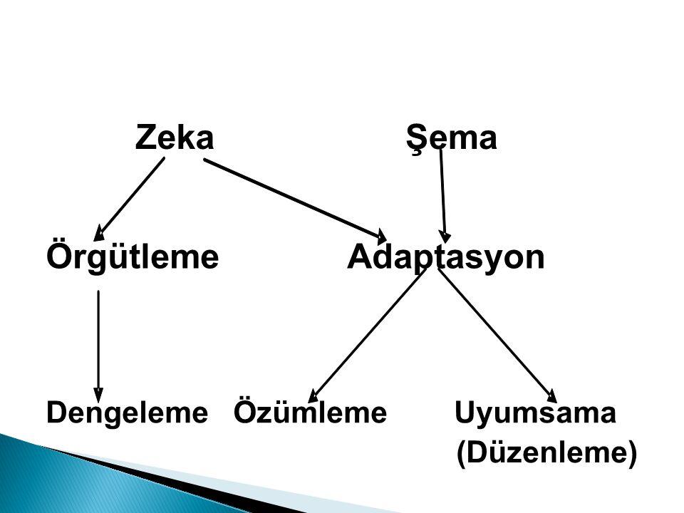 Zeka Şema Örgütleme Adaptasyon Dengeleme Özümleme Uyumsama (Düzenleme)