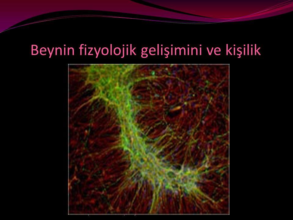 Beynin fizyolojik gelişimini ve kişilik