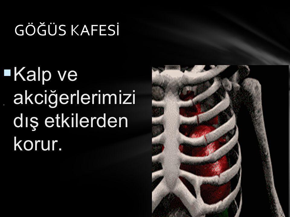 Kalp ve akciğerlerimizi dış etkilerden korur.