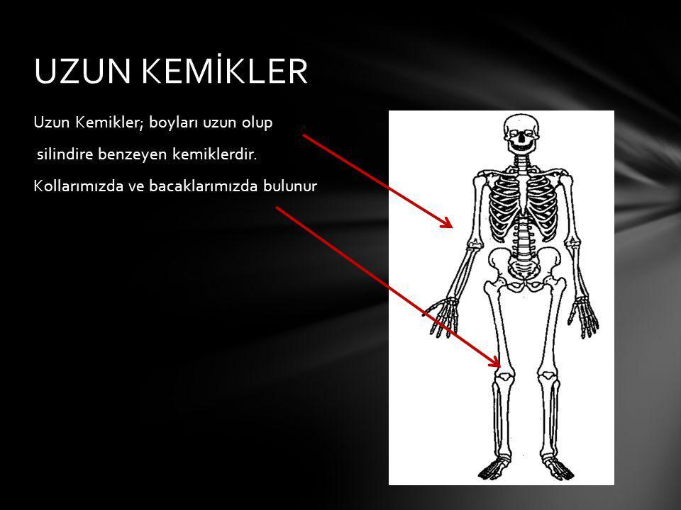 UZUN KEMİKLER Uzun Kemikler; boyları uzun olup silindire benzeyen kemiklerdir.