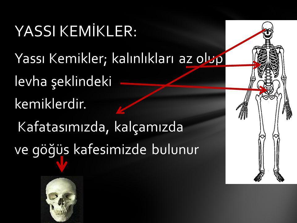 YASSI KEMİKLER: Yassı Kemikler; kalınlıkları az olup levha şeklindeki kemiklerdir.