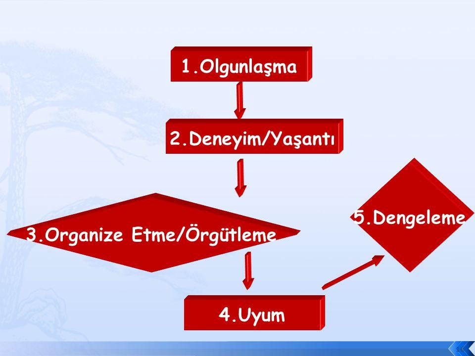 3.Organize Etme/Örgütleme