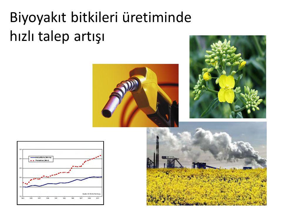 Biyoyakıt bitkileri üretiminde hızlı talep artışı