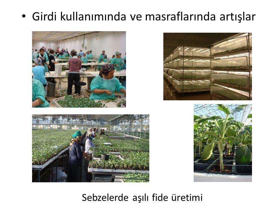 Sebzelerde aşılı fide üretimi