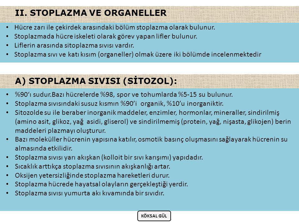 II. STOPLAZMA VE ORGANELLER