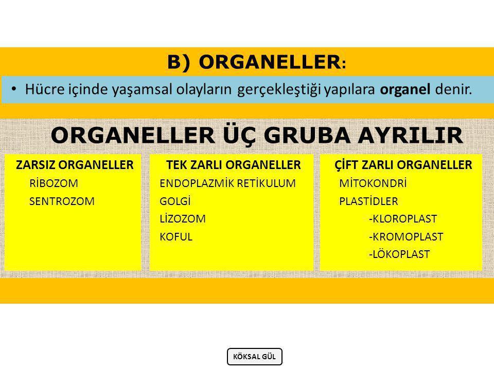 ORGANELLER ÜÇ GRUBA AYRILIR