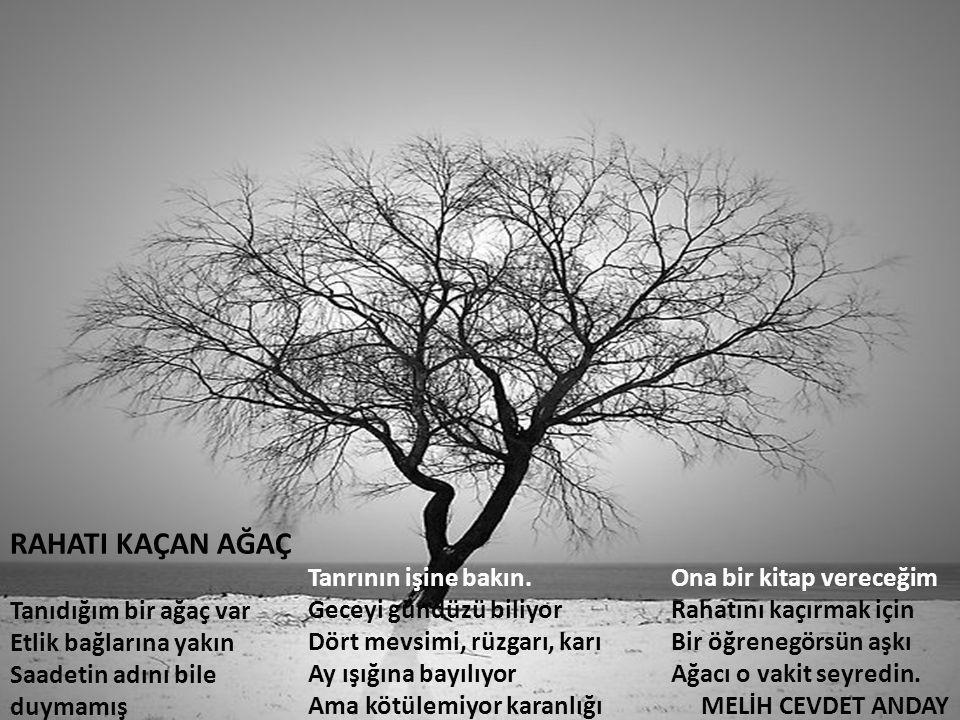 RAHATI KAÇAN AĞAÇ Tanıdığım bir ağaç var Etlik bağlarına yakın Saadetin adını bile duymamış.