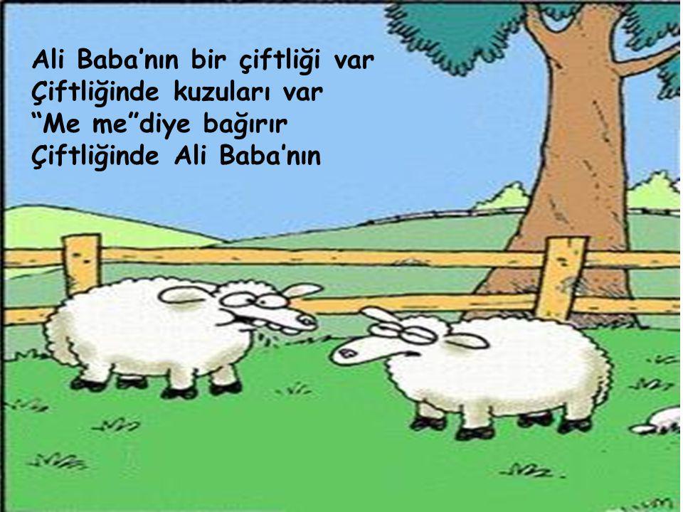 Ali Baba'nın bir çiftliği var Çiftliğinde kuzuları var Me me diye bağırır Çiftliğinde Ali Baba'nın