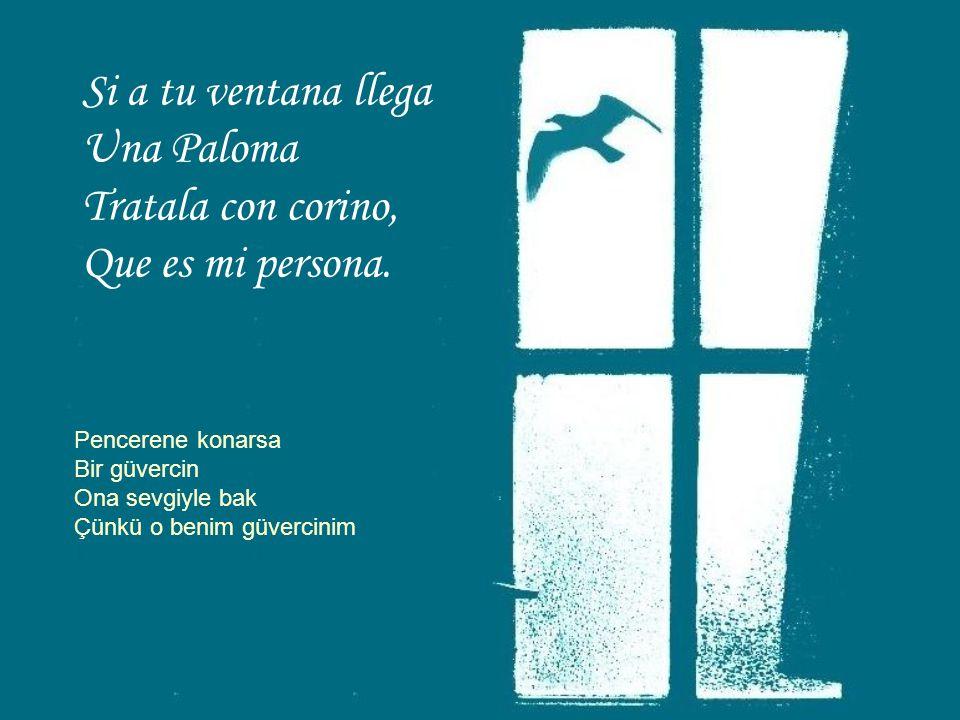 Si a tu ventana llega Una Paloma Tratala con corino,