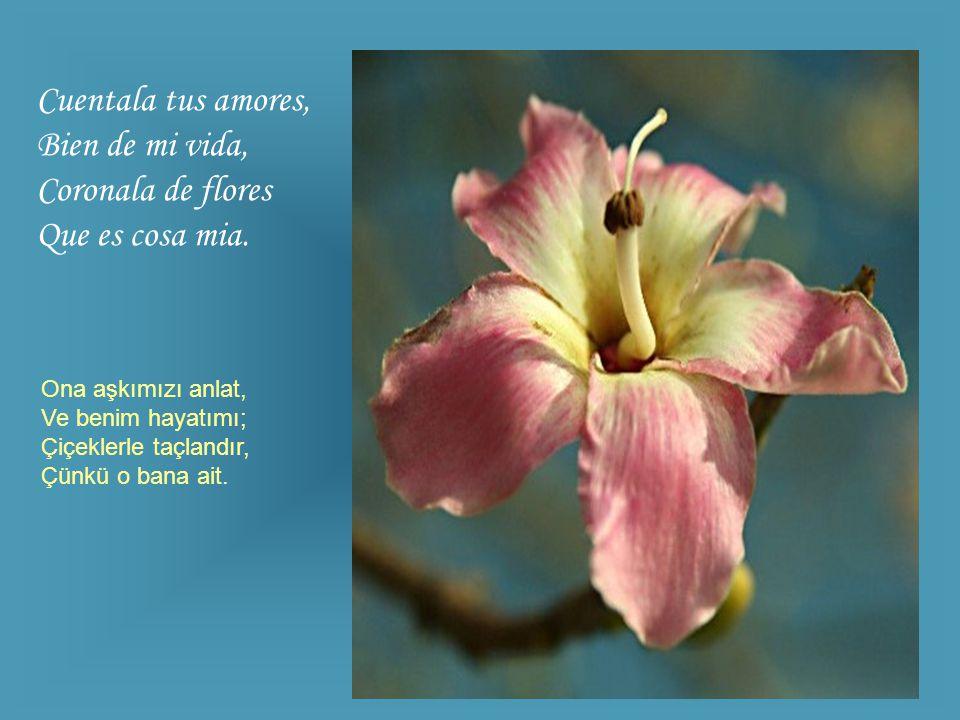 Cuentala tus amores, Bien de mi vida, Coronala de flores