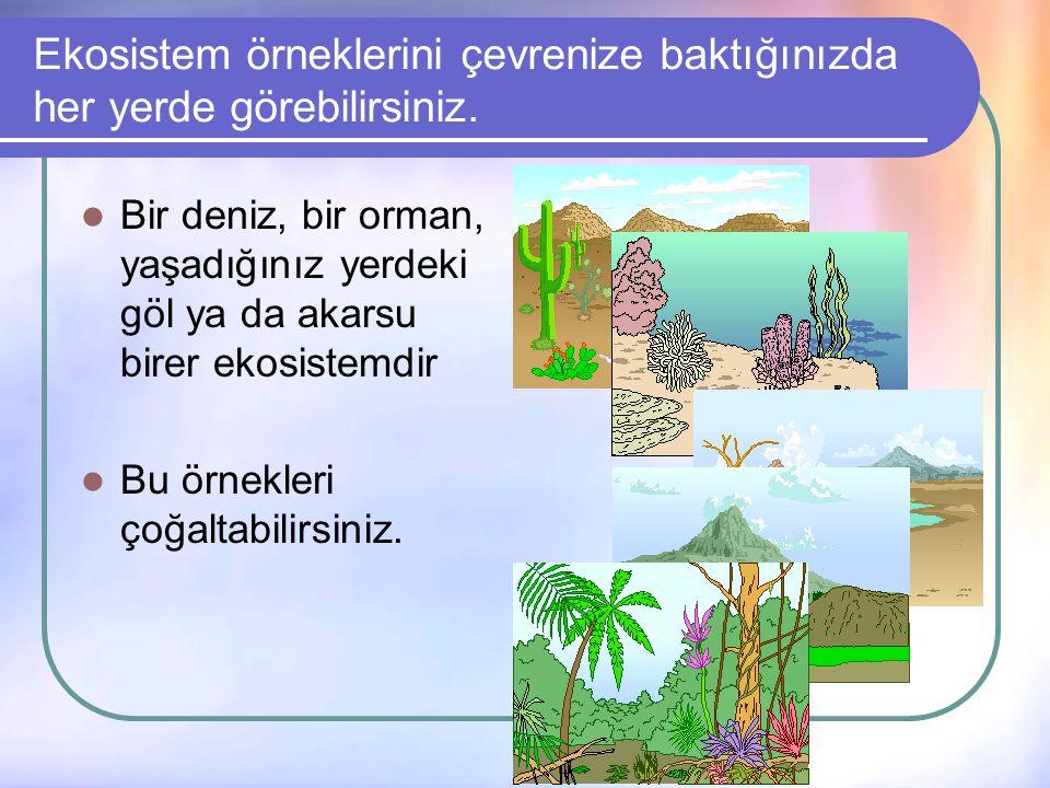 Ekosistem örneklerini çevrenize baktığınızda her yerde görebilirsiniz.