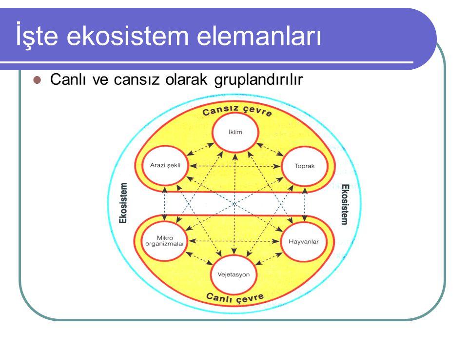 İşte ekosistem elemanları