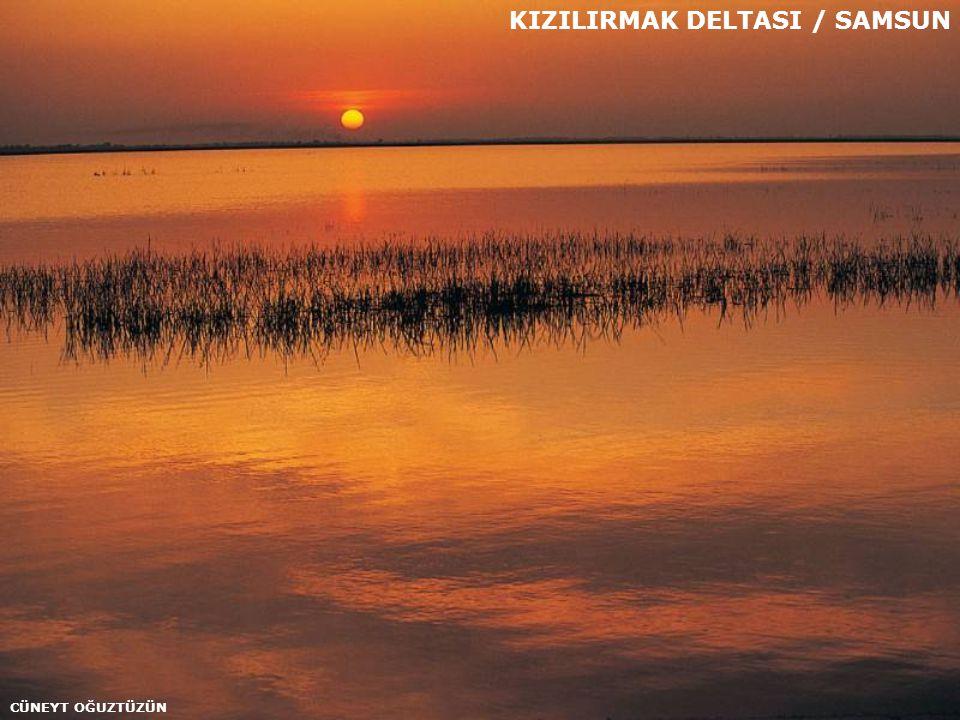 KIZILIRMAK DELTASI / SAMSUN
