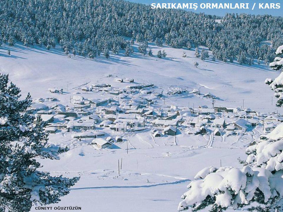 SARIKAMIŞ ORMANLARI / KARS