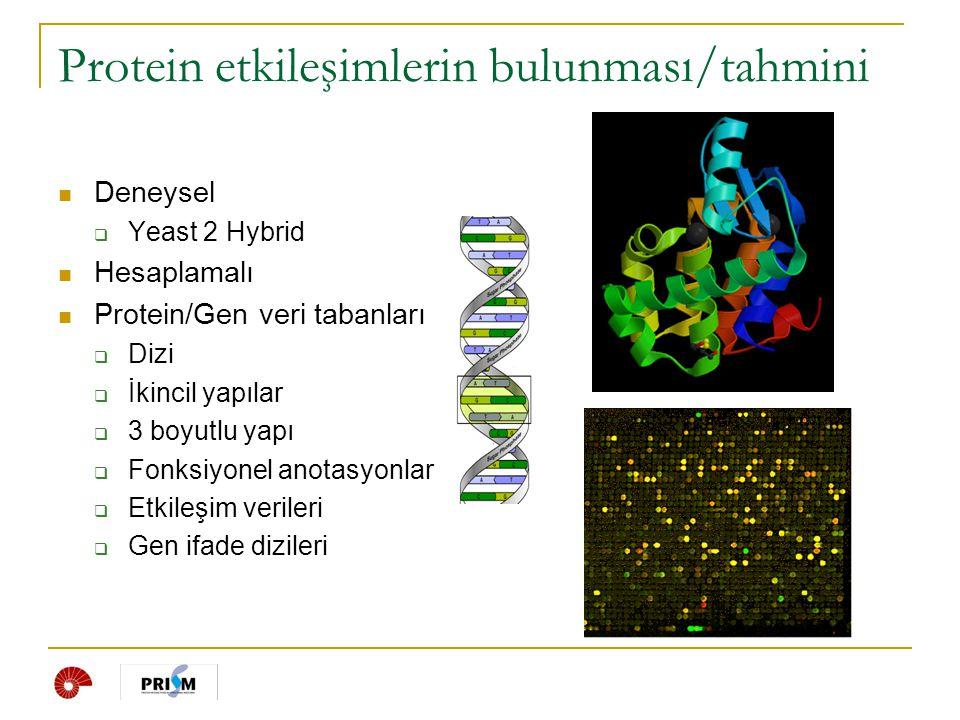 Protein etkileşimlerin bulunması/tahmini