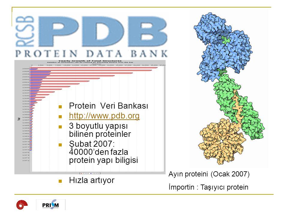 3 boyutlu yapısı bilinen proteinler