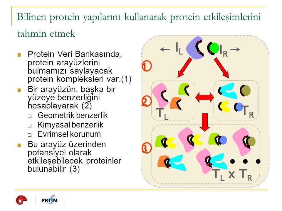 Bilinen protein yapılarını kullanarak protein etkileşimlerini tahmin etmek