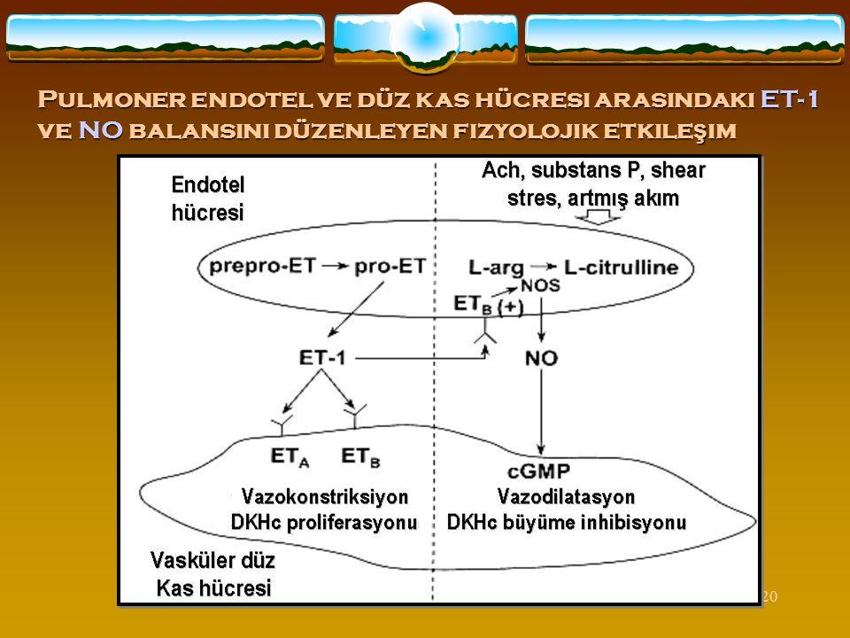Pulmoner endotel ve düz kas hücresi arasındaki ET-1 ve NO balansını düzenleyen fizyolojik etkileşim