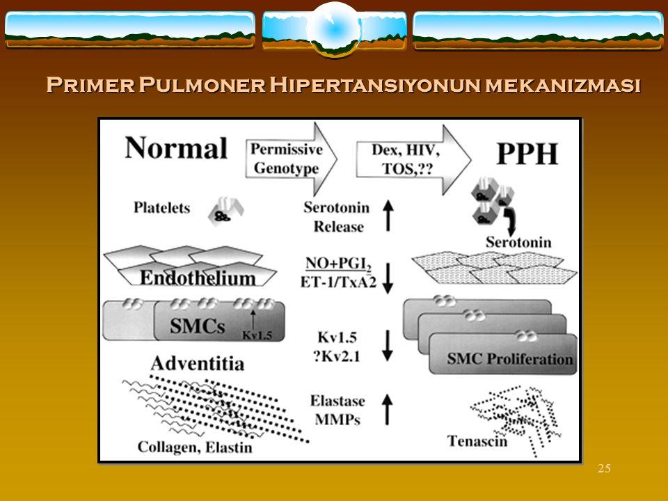 Primer Pulmoner Hipertansiyonun mekanizması