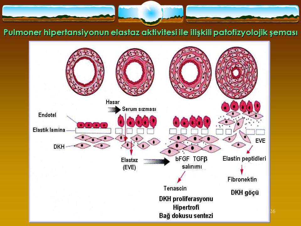 Pulmoner hipertansiyonun elastaz aktivitesi ile ilişkili patofizyolojik şeması
