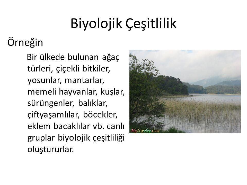 Biyolojik Çeşitlilik Örneğin
