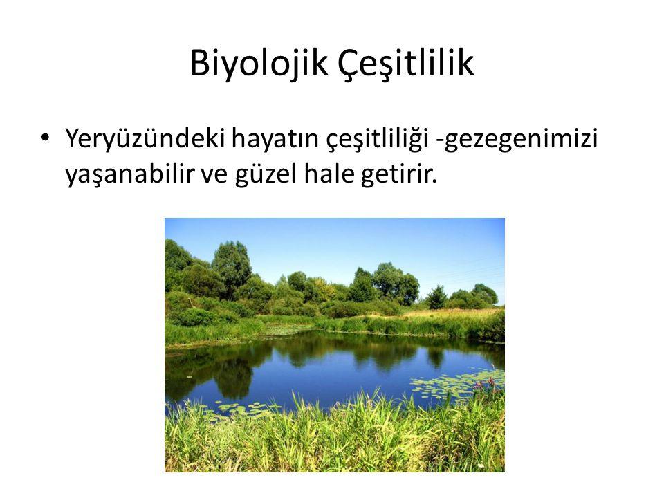 Biyolojik Çeşitlilik Yeryüzündeki hayatın çeşitliliği -gezegenimizi yaşanabilir ve güzel hale getirir.