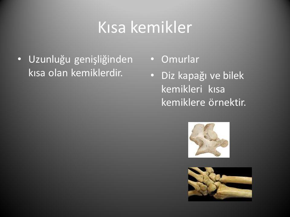 Kısa kemikler Uzunluğu genişliğinden kısa olan kemiklerdir. Omurlar
