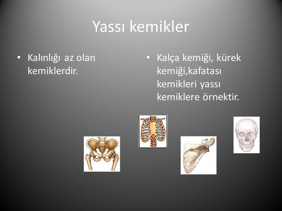 Yassı kemikler Kalınlığı az olan kemiklerdir.