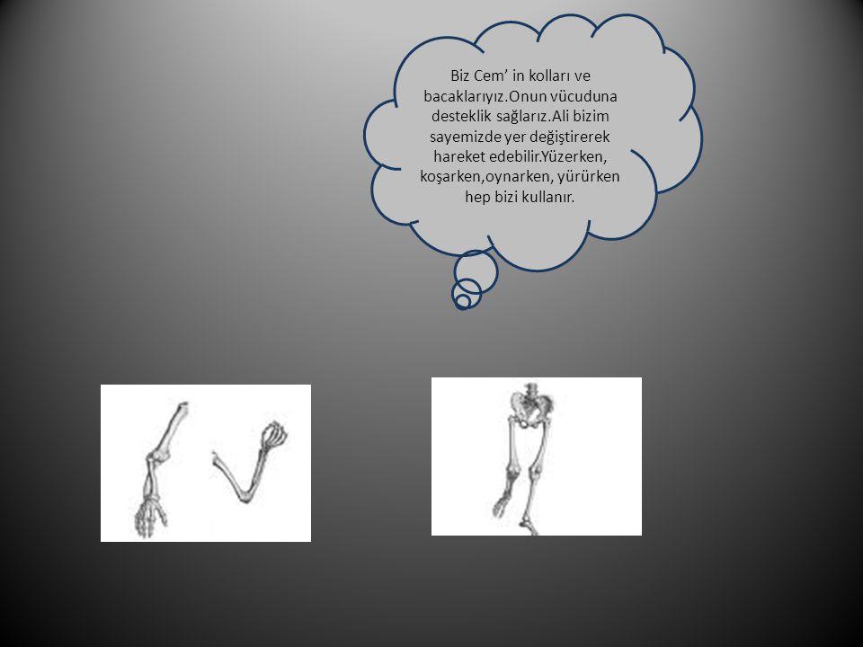 Biz Cem' in kolları ve bacaklarıyız. Onun vücuduna desteklik sağlarız