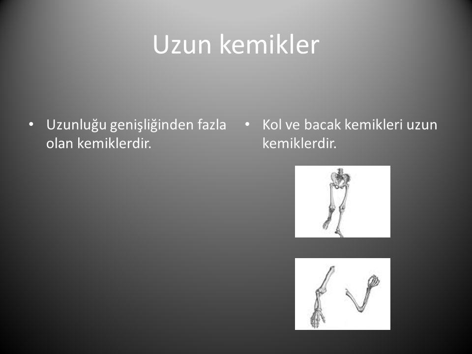 Uzun kemikler Uzunluğu genişliğinden fazla olan kemiklerdir.