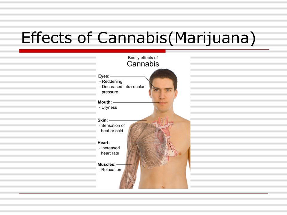 Effects of Cannabis(Marijuana)