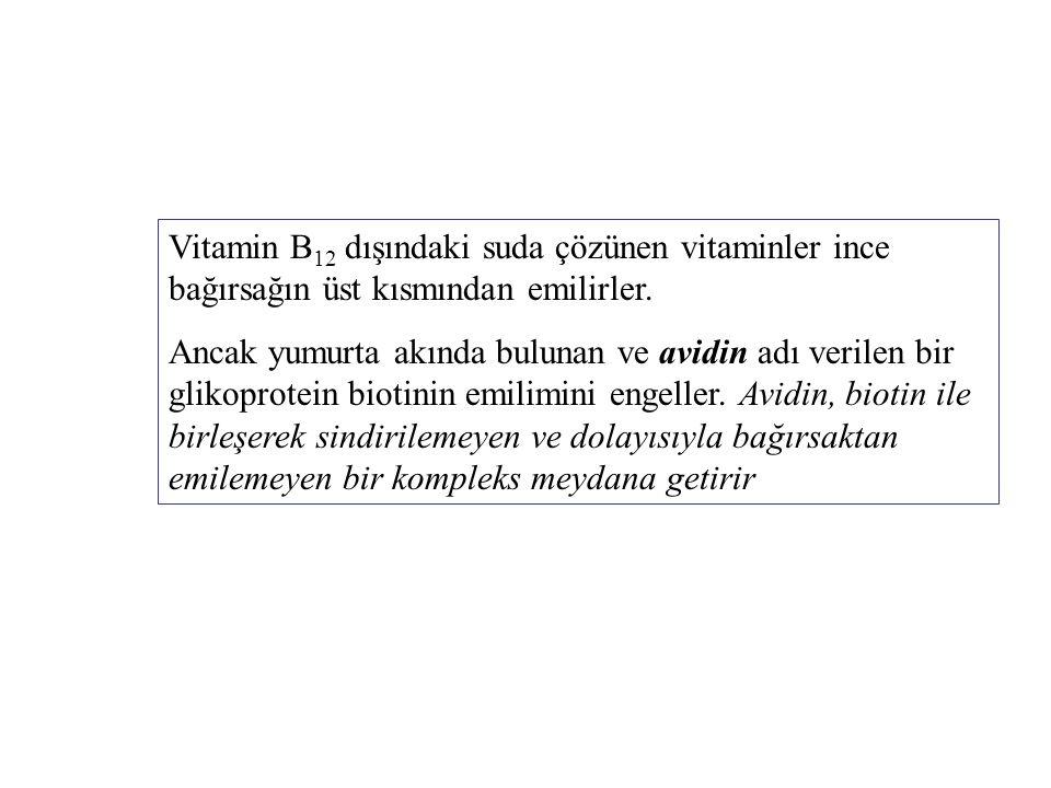 Vitamin B12 dışındaki suda çözünen vitaminler ince bağırsağın üst kısmından emilirler.