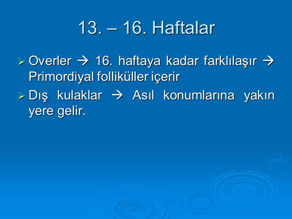 13. – 16. Haftalar Overler  16. haftaya kadar farklılaşır  Primordiyal folliküller içerir.