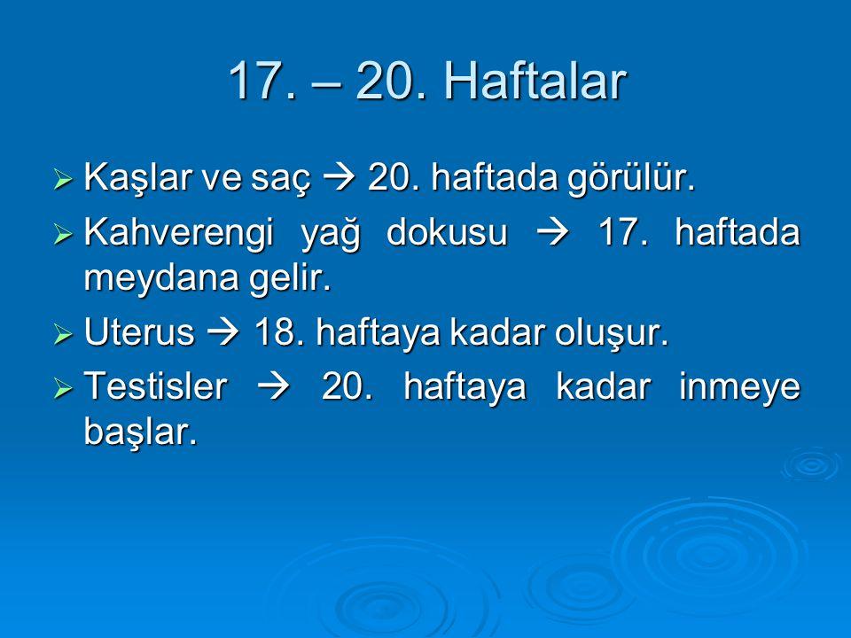 17. – 20. Haftalar Kaşlar ve saç  20. haftada görülür.