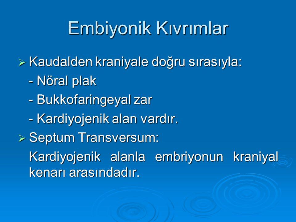 Embiyonik Kıvrımlar Kaudalden kraniyale doğru sırasıyla: - Nöral plak