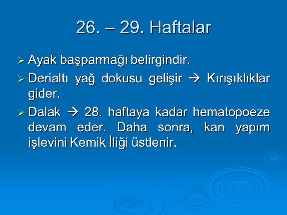 26. – 29. Haftalar Ayak başparmağı belirgindir.