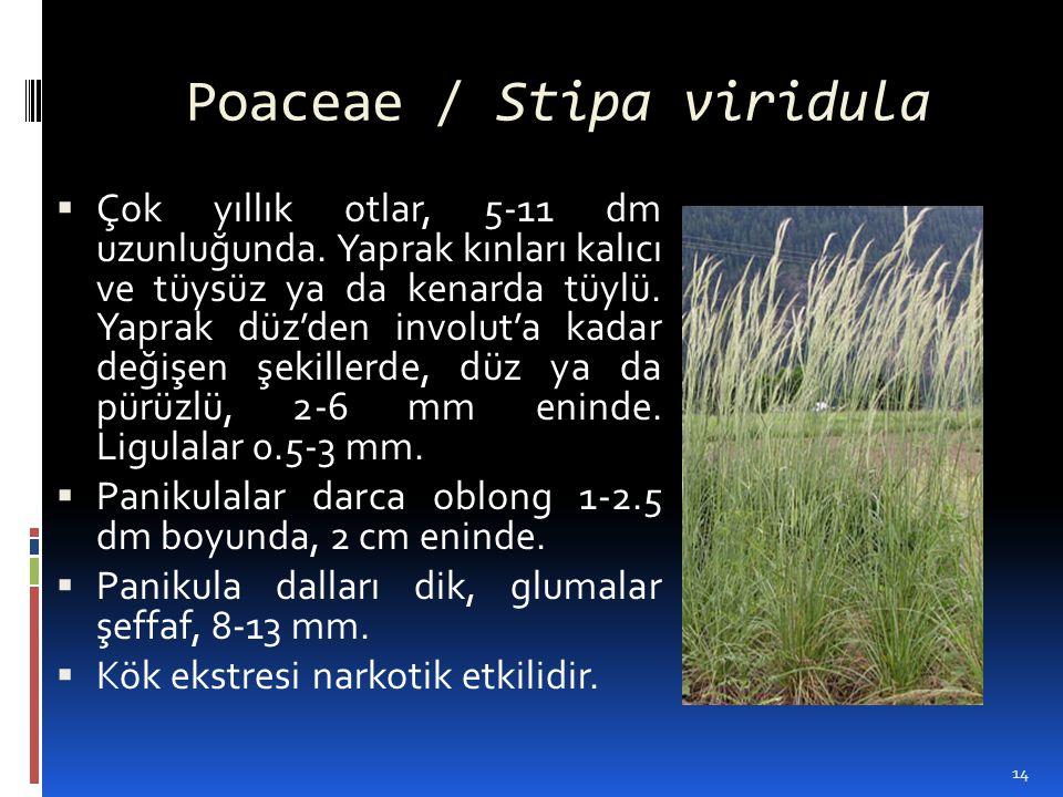Poaceae / Stipa viridula